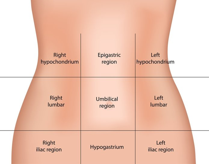 Anatomical Regions on thoracic cavity diagram