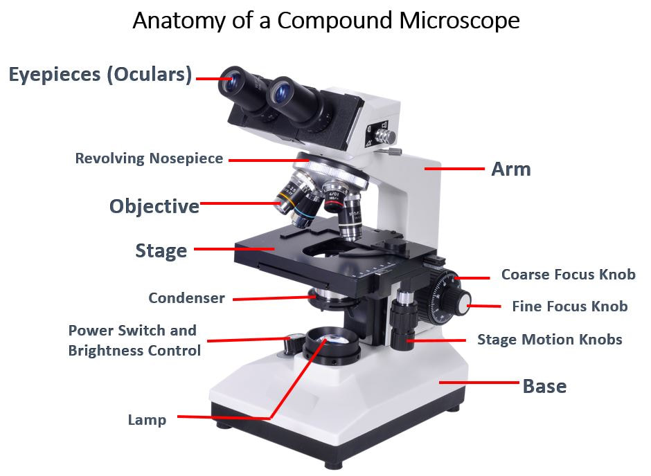 Microscopes Scientist Cindy
